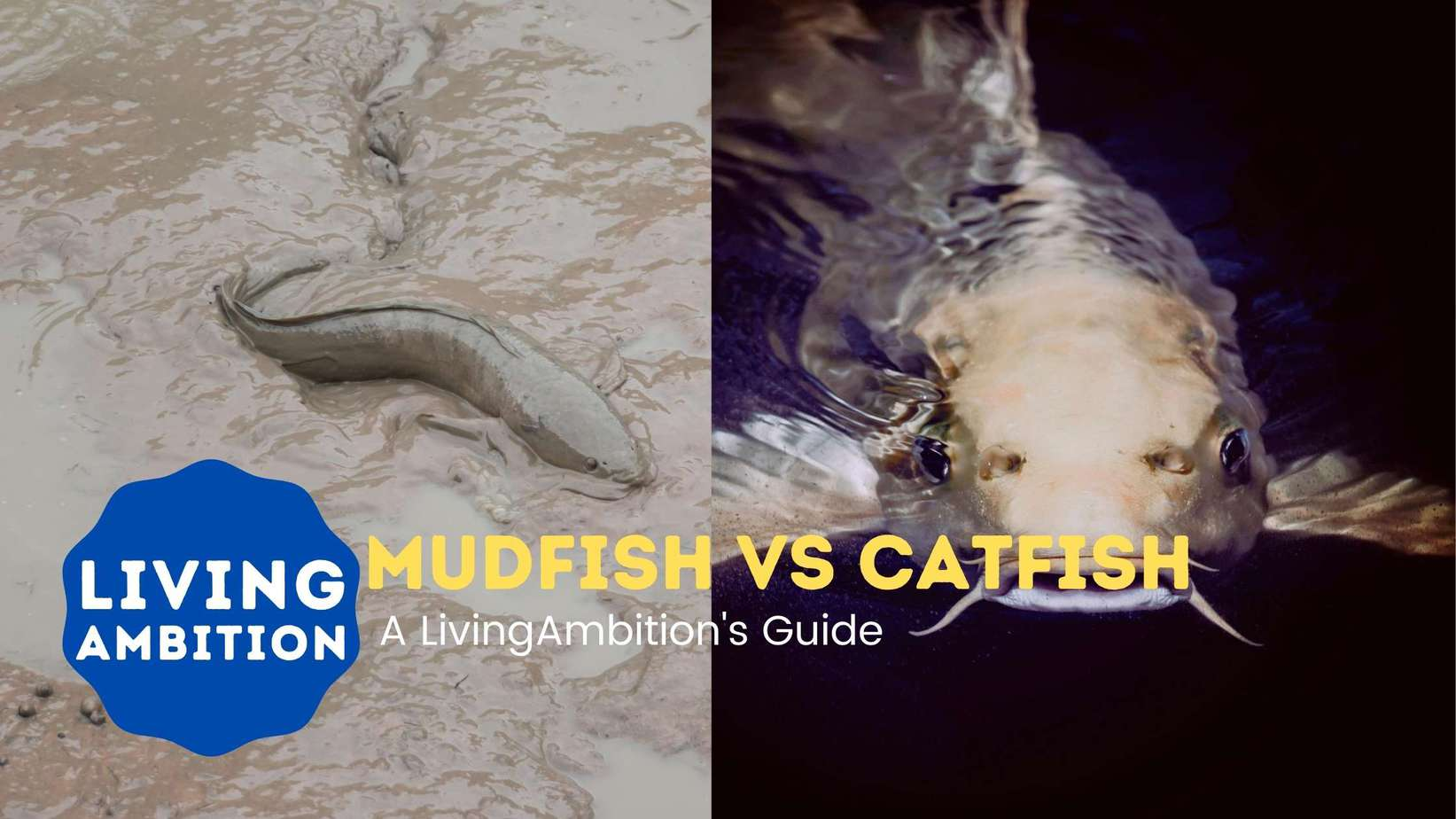 Difference between mudfish and catfish