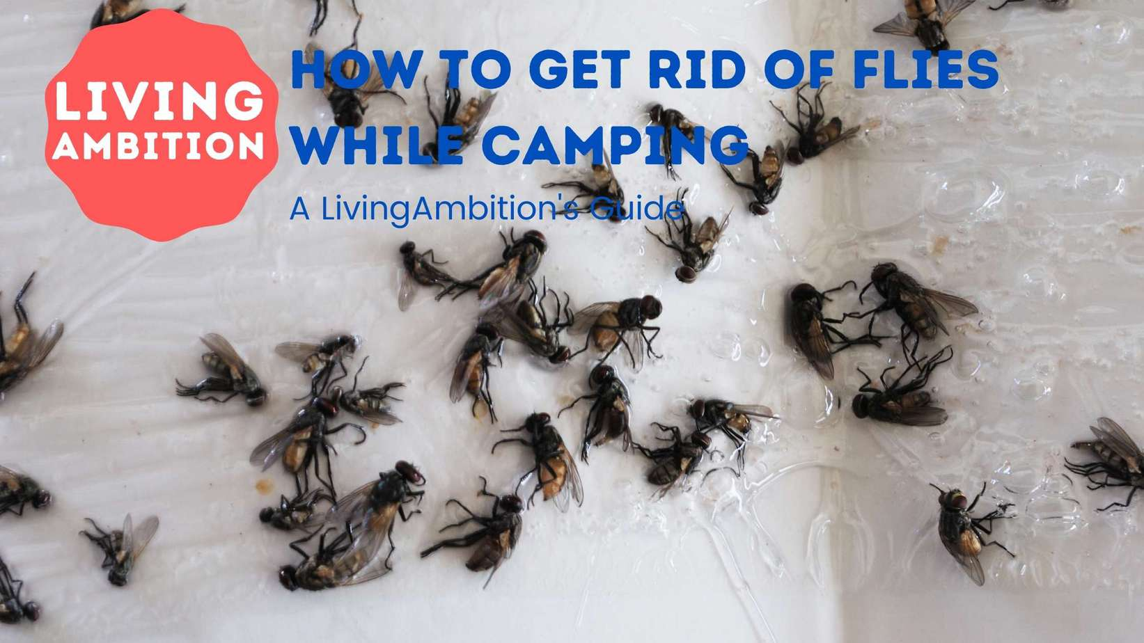 how to get rid of flies while camping