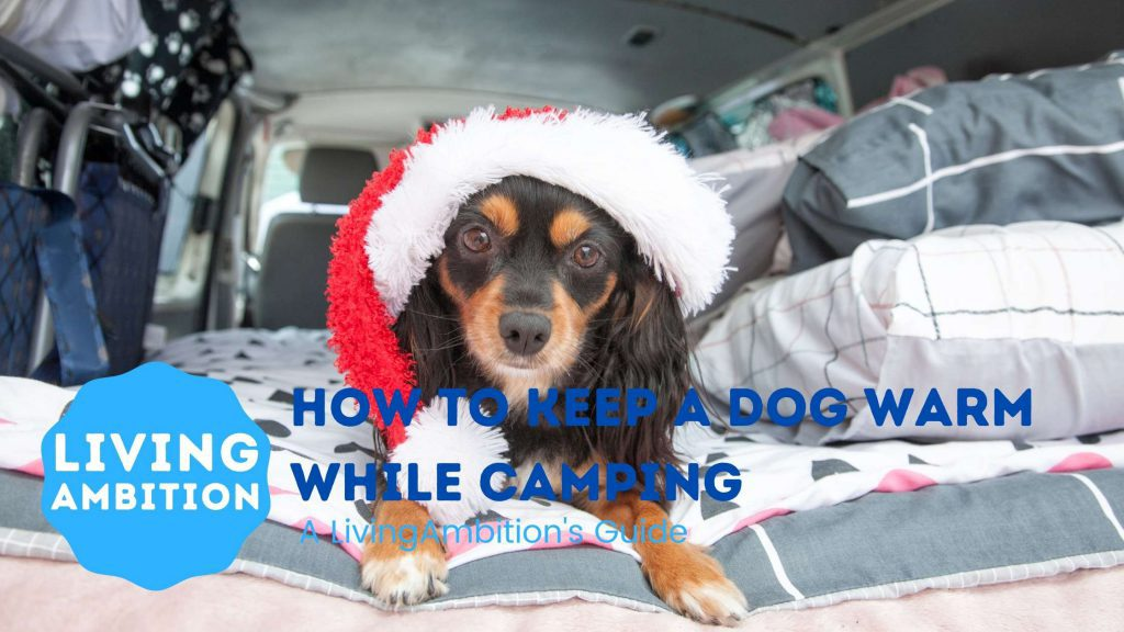 how to keep a dog warm while camping