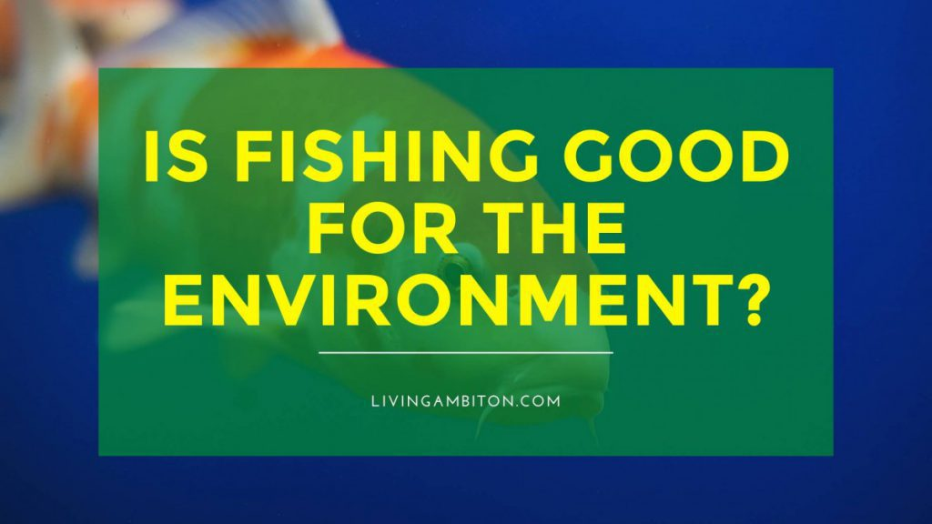 Is Fishing Good for the Environment?