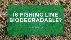 Is Fishing Line Biodegradable?