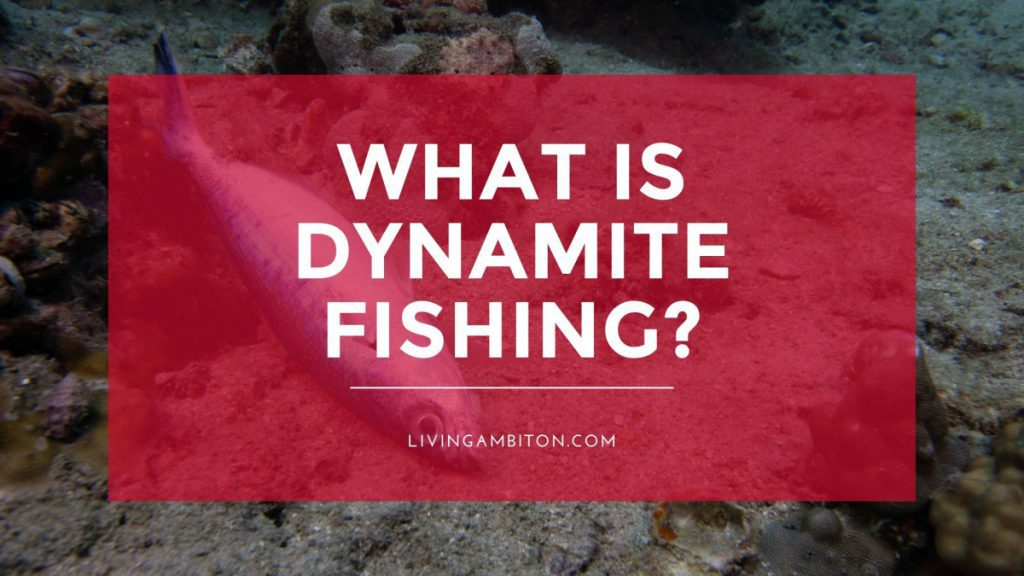 What is Dynamite Fishing?