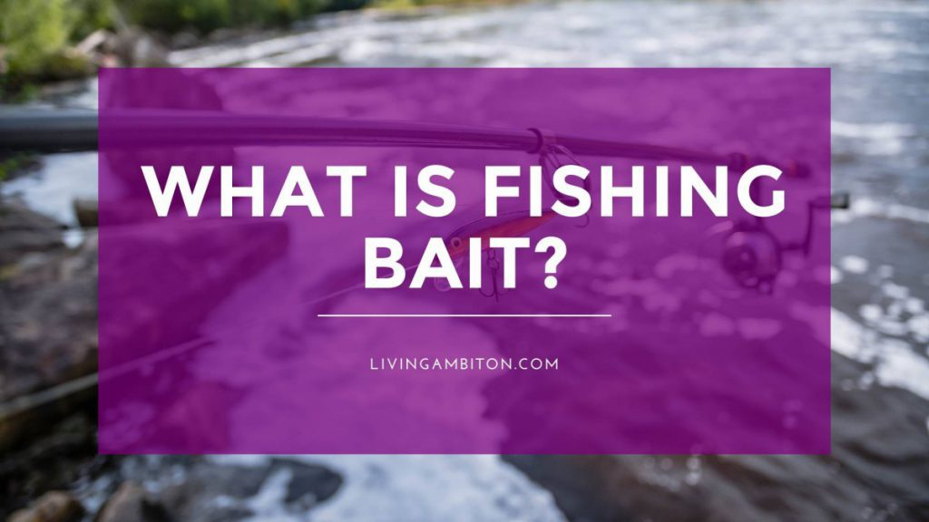 What is Fishing Bait?